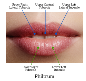 lip tubercles