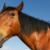 horse paste for rosacea