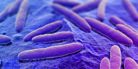 microbiome terms