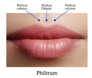 philtrum